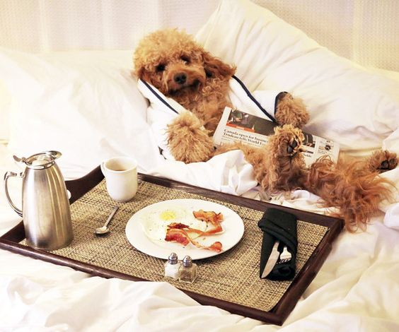 Pet friendly Hotels in India