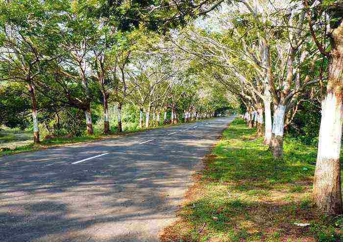 bhubanswar to puri road trips in india