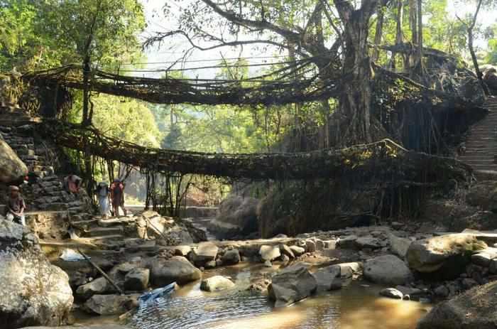 Living-Tree-Bridges-Cherrapunji-15 incredible natural wonders of india