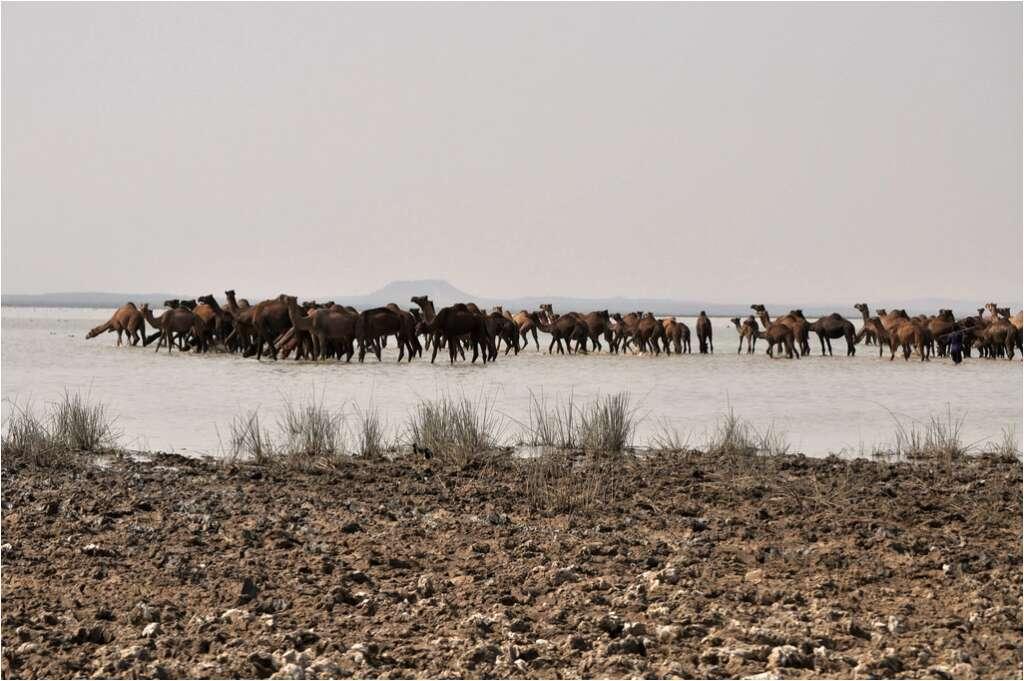 banni grasslands 15 incredible natural wonders of india