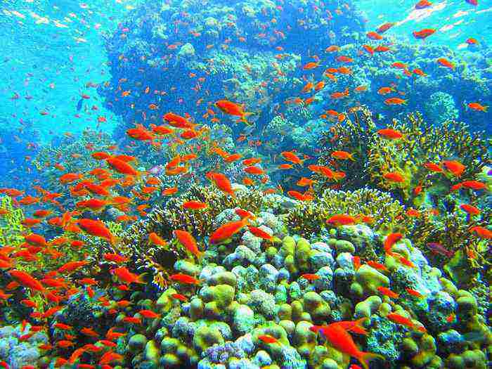 10 places to visit in india before they disappear lakshadweep coral reef