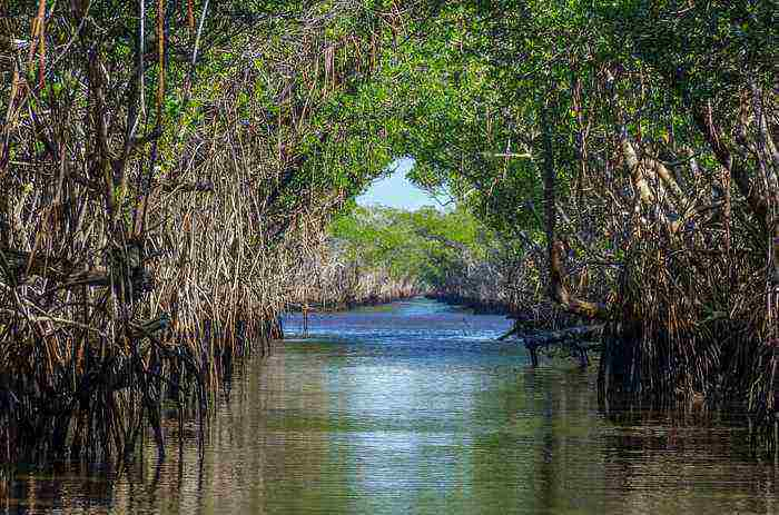 10 places to visit in india before they disappear mangrove