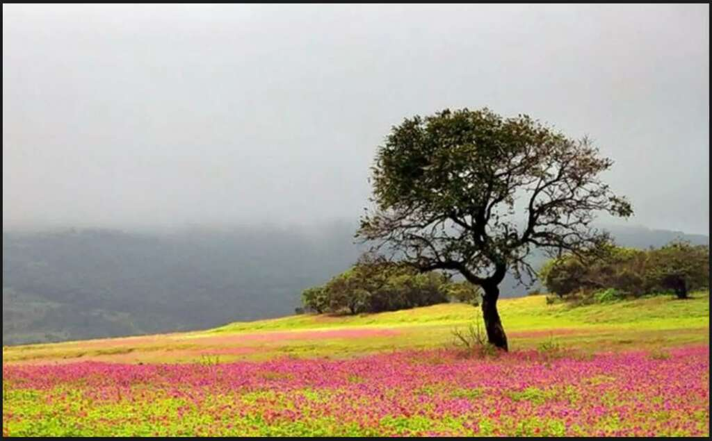 most isolated places in india kaas plateau