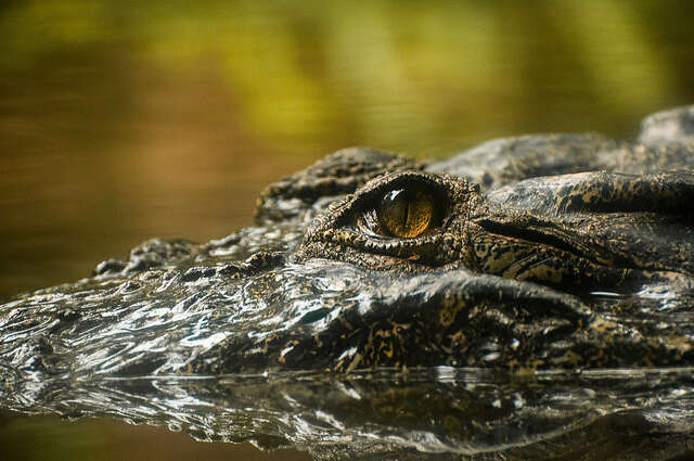 places to visit in goa crocodile spotting