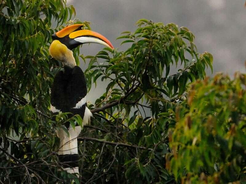 places to visit in goa wildlife sanctuary