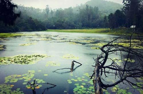 Kodaikanal Berijam Lake